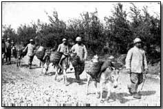 French donkeys carrying food to the trenches