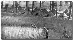 French soldiers, encamped on the Marne, gathering grain