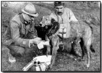 Tending wounded Red Cross dog