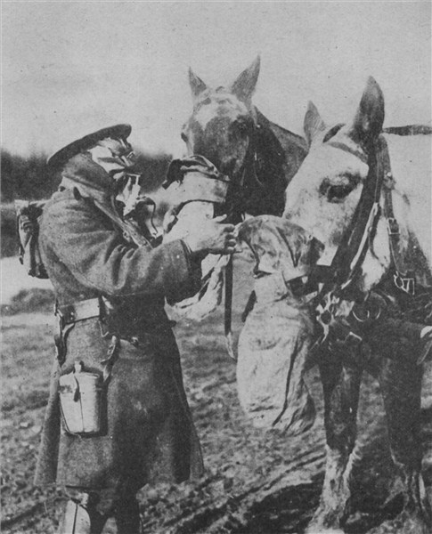 ww1 gas mask horse wwwpixsharkcom images galleries